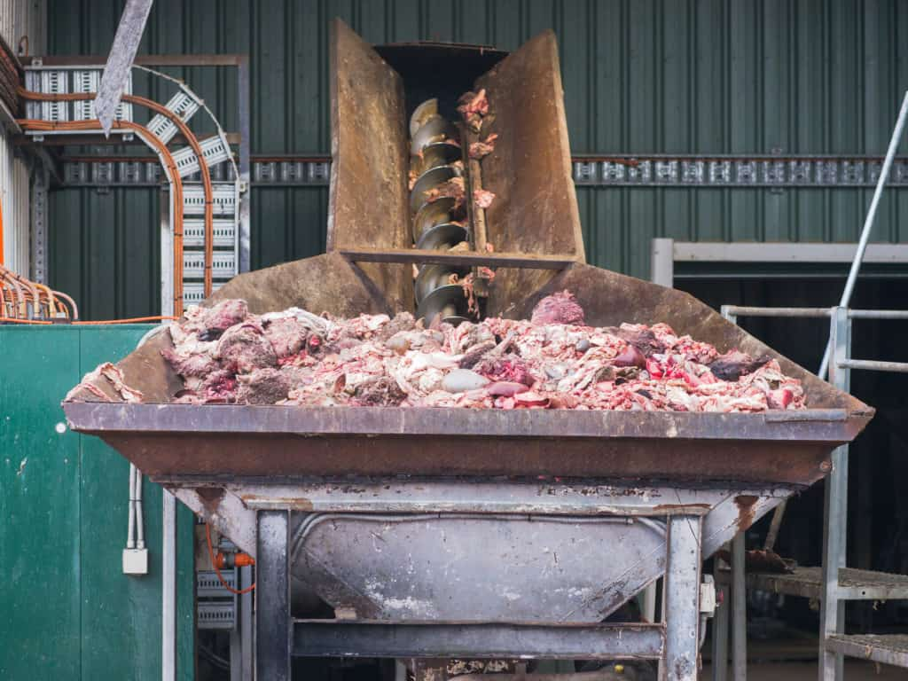 meat byproducts meat factory