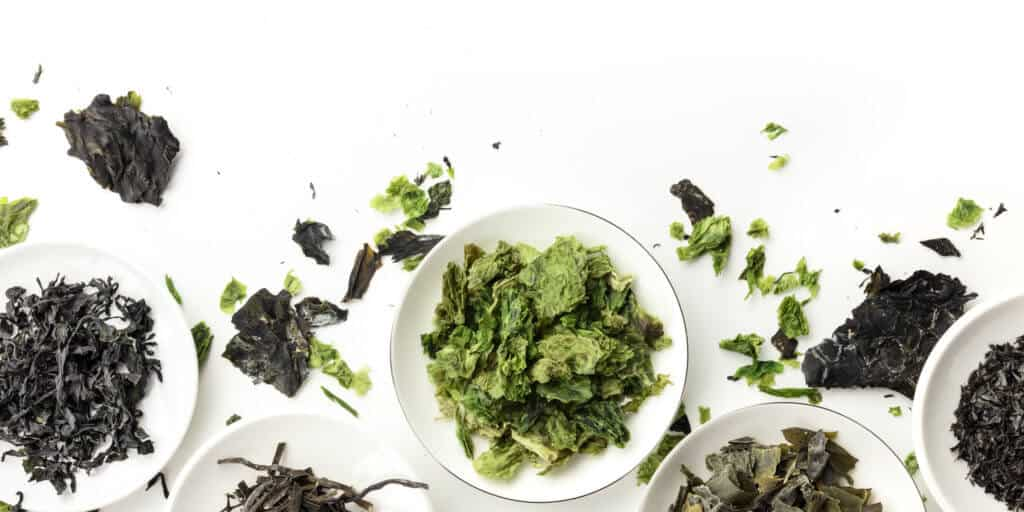 A panorama of dry seaweed, sea vegetables, shot from the top on a white background with a place for text and logo