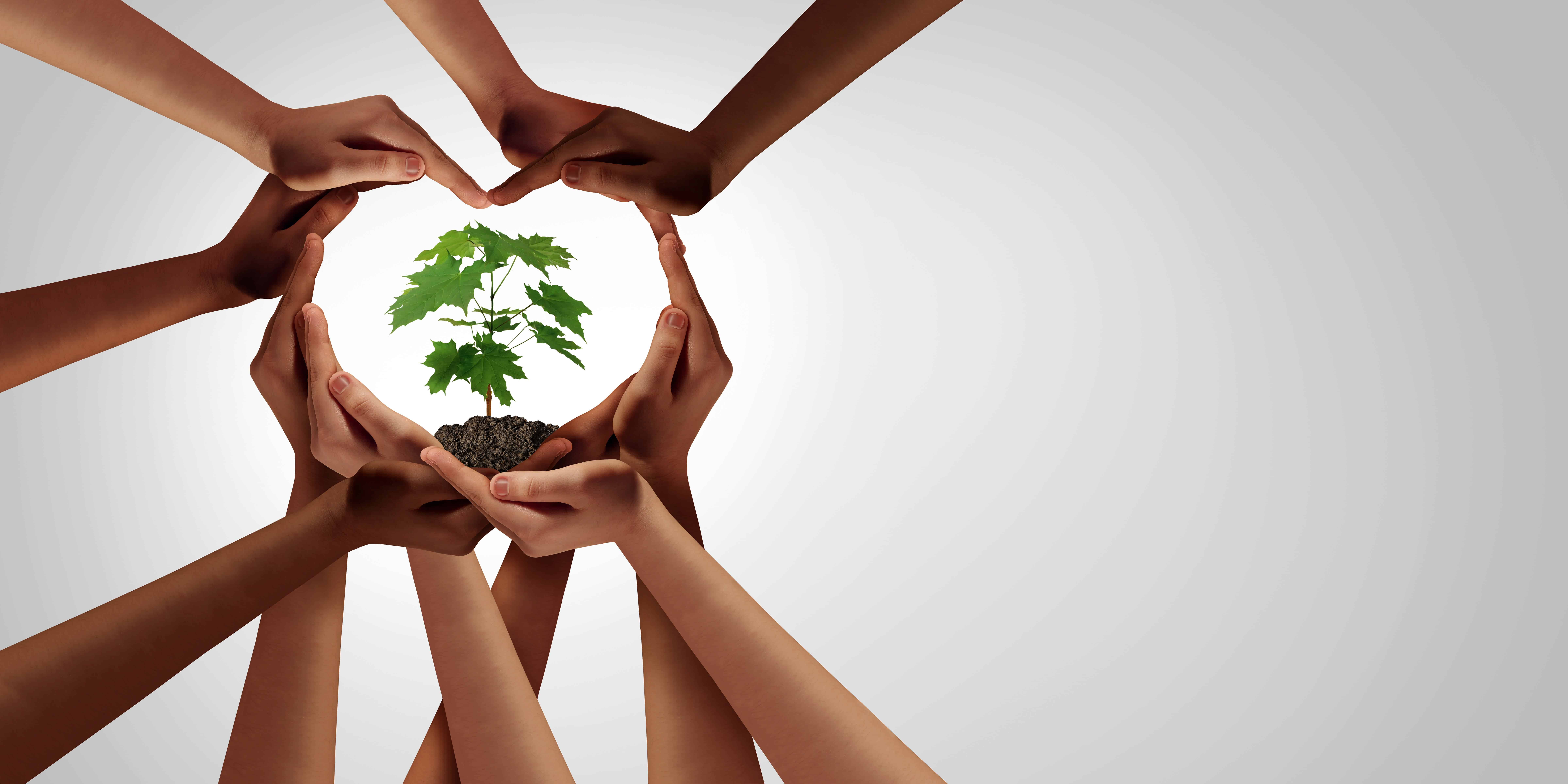 environmentally friendly, tree, save the planet