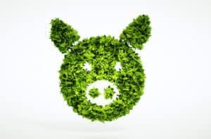 3d plant / pig image