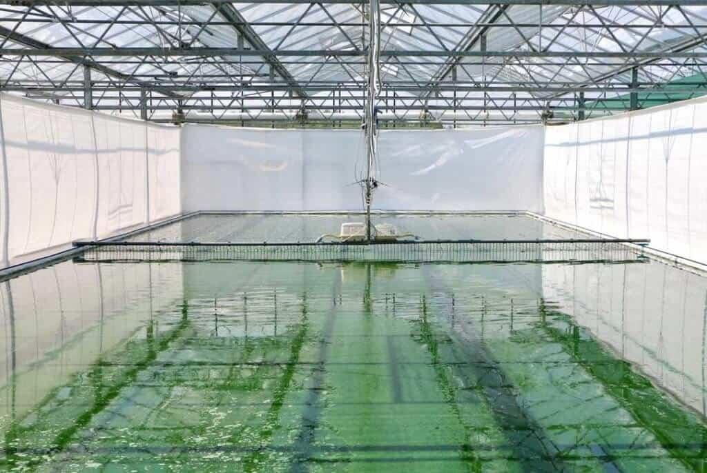 deutsche algen