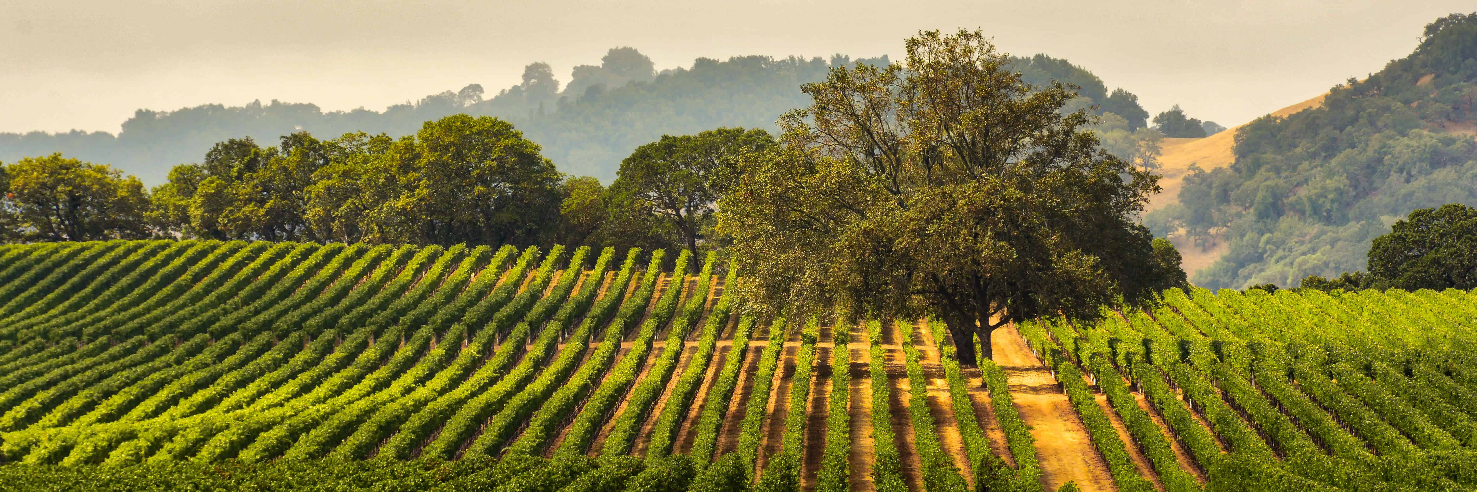 Vineyard, Sonoma County, California, wine
