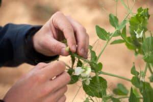 Equinom planting 1(1)