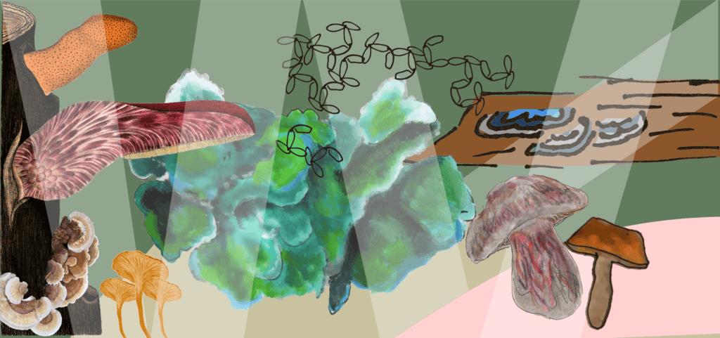 Mushlabs
