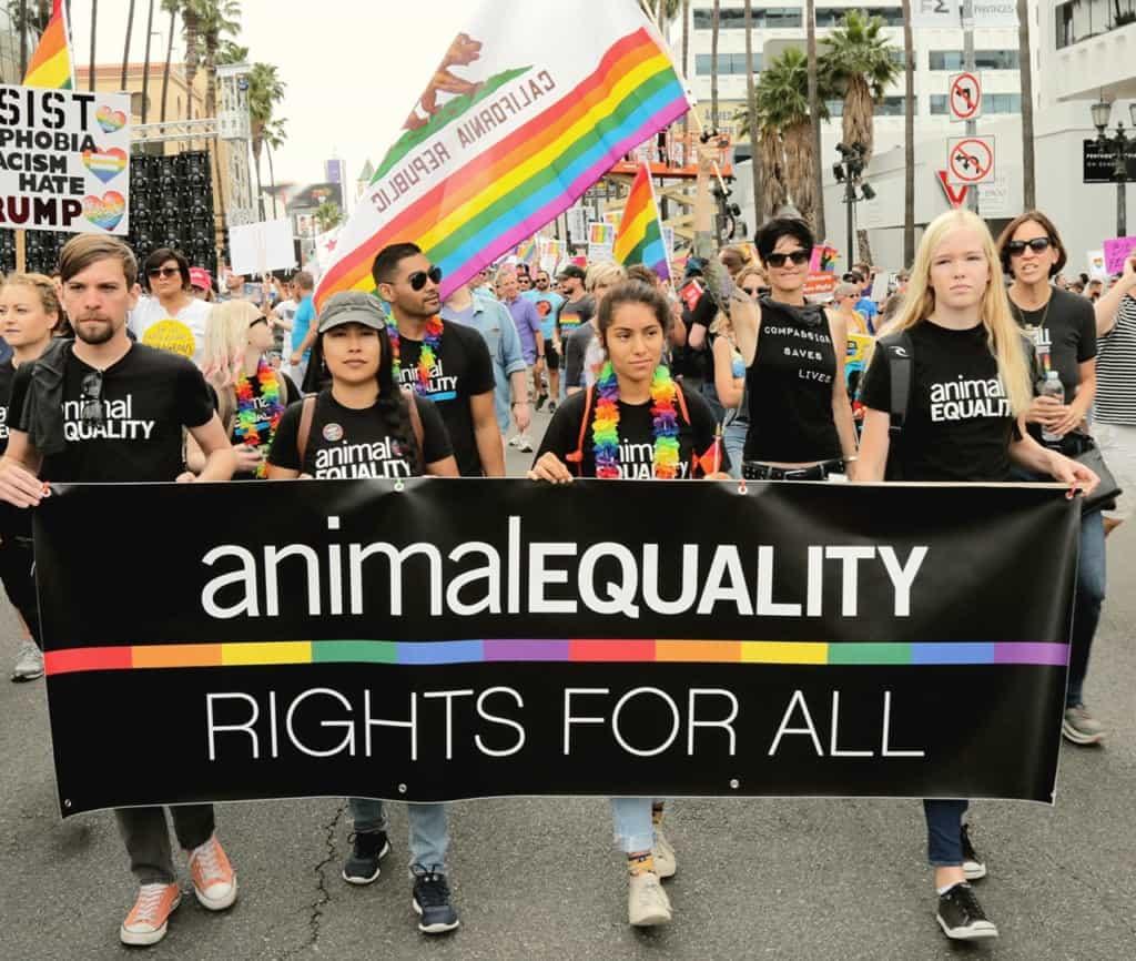 animal_equality